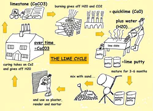 lime cycle